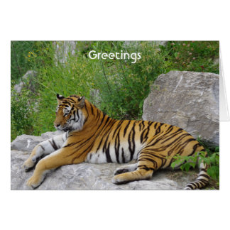Siberian Tiger Relaxing on a Rock Note Card