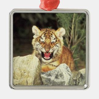 Siberian Tiger Silver-Colored Square Decoration