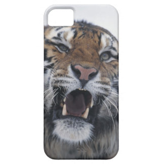 Siberian Tiger Snarling iPhone 5 Cover