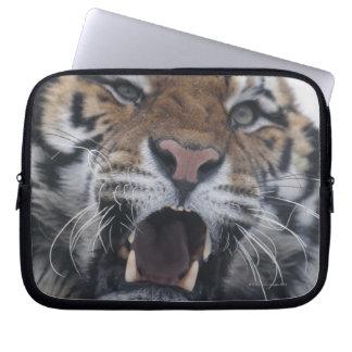 Siberian Tiger Snarling Laptop Sleeve
