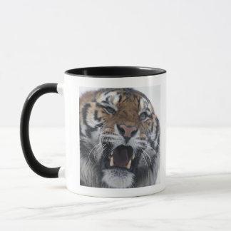 Siberian Tiger Snarling Mug