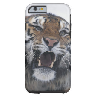 Siberian Tiger Snarling Tough iPhone 6 Case