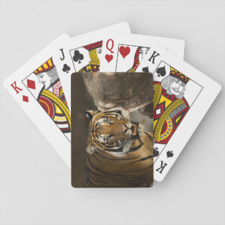 Siberian Tiger Stare Poker Deck