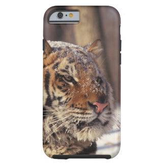 Siberian tiger tough iPhone 6 case