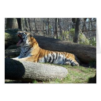 Siberian Tiger Yawning Card