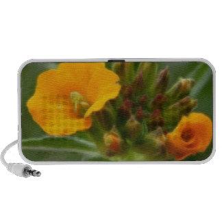 Siberian Wallflower Buds And Flower iPod Speaker