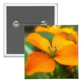 Siberian Wallflower - Cheiranthus allionii Button