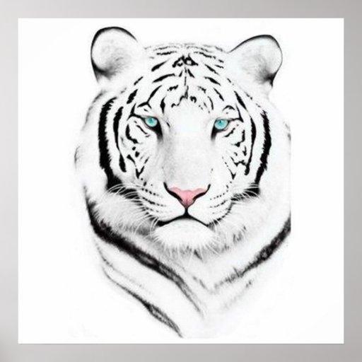 Siberian White Tiger Poster