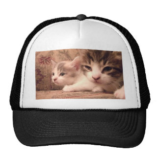 Sibling Kitties Cap