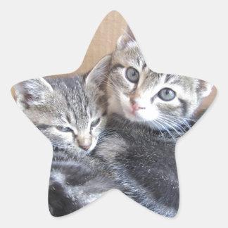 Sibling Kitties Star Sticker