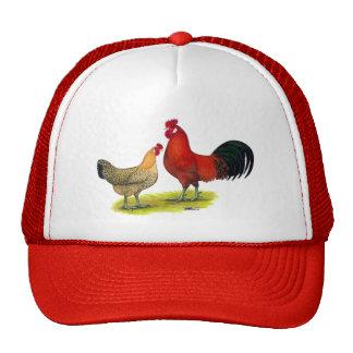 Sicilian Buttercup Chickens Cap