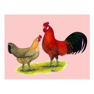 Sicilian Buttercup Chickens Postcard