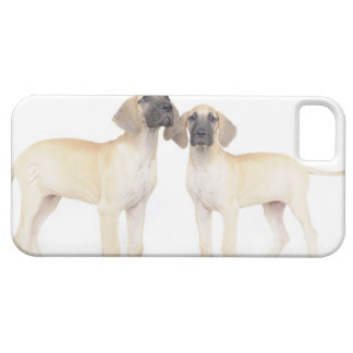 side by side,small group of animals,togetherness iPhone 5 covers