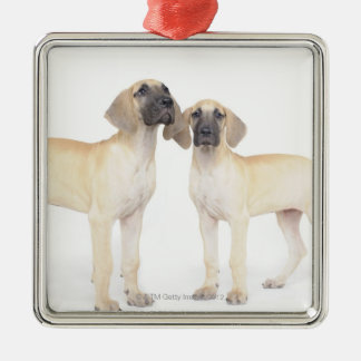 side by side,small group of animals,togetherness Silver-Colored square decoration