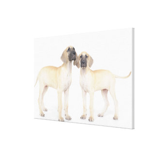 side by side,small group of animals,togetherness stretched canvas print