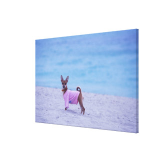 Side profile of a dog standing on the beach, canvas print