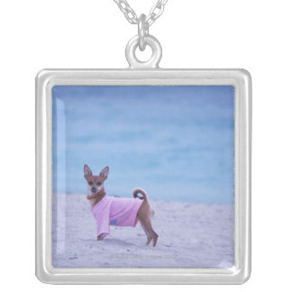 Side profile of a dog standing on the beach, necklaces