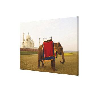 Side profile of an elephant, Taj Mahal, India Canvas Print
