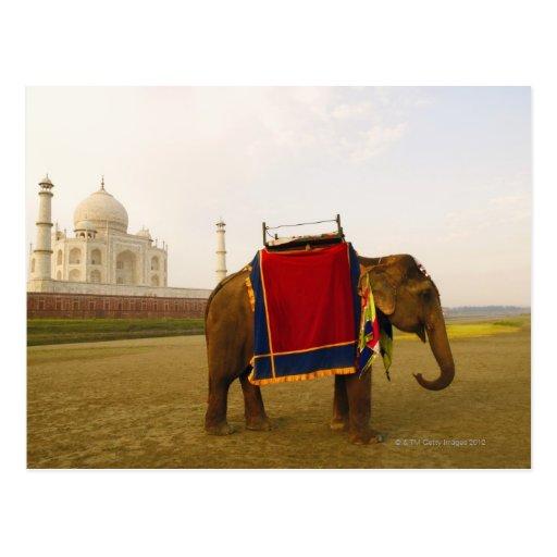 Side profile of an elephant, Taj Mahal, India Post Card