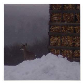 Side View Deer At The Farm-Poster Poster