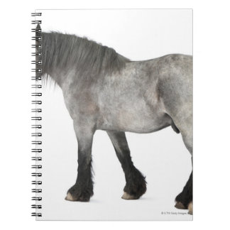Side view of a Belgian horse, Belgian Heavy Notebook