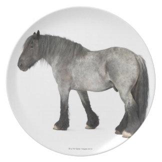 Side view of a Belgian horse, Belgian Heavy Plate