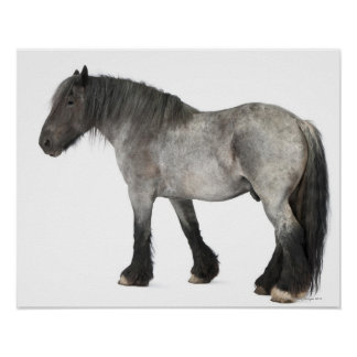 Side view of a Belgian horse, Belgian Heavy Poster