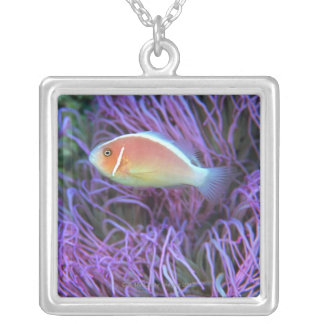 Side view of a pink anemone fish, Okinawa, Japan 2 Silver Plated Necklace