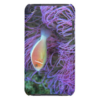 Side view of a pink anemone fish, Okinawa, Japan iPod Touch Cases