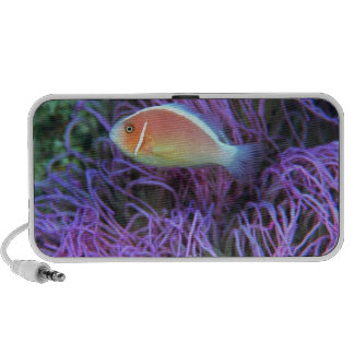 Side view of a pink anemone fish, Okinawa, Japan Portable Speakers