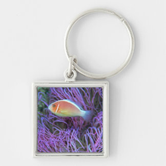Side view of a pink anemone fish, Okinawa, Japan Silver-Colored Square Key Ring