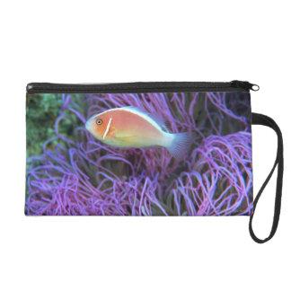 Side view of a pink anemone fish, Okinawa, Japan Wristlet Purses
