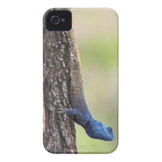 Side view of a Tree Agama (Acanthocerus iPhone 4 Case