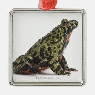 Side View of an Oriental Fire Bellied Toad Ornament