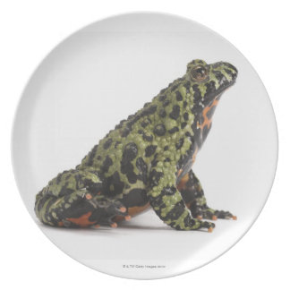 Side View of an Oriental Fire Bellied Toad Plate