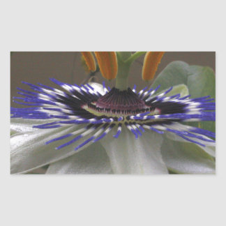 Side View of Beautiful Passiflora Flower Sticker