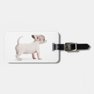 Side view of Chihuahua Puppy (10 weeks old) Luggage Tag