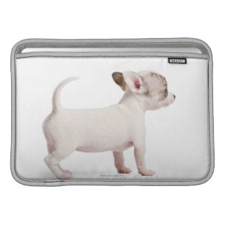 Side view of Chihuahua Puppy (10 weeks old) MacBook Sleeve