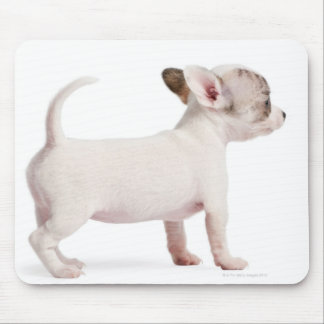 Side view of Chihuahua Puppy (10 weeks old) Mouse Pad
