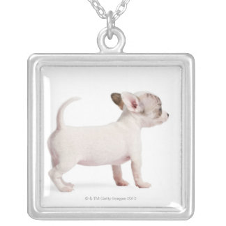 Side view of Chihuahua Puppy (10 weeks old) Silver Plated Necklace
