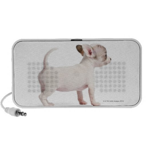 Side view of Chihuahua Puppy (10 weeks old) Portable Speakers