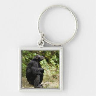 Side View Of Chimpanzee (Pan Troglodytes) Key Ring