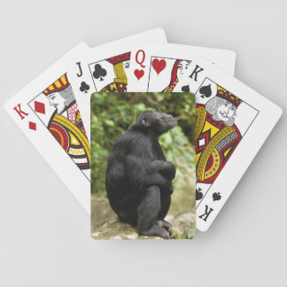 Side View Of Chimpanzee (Pan Troglodytes) Playing Cards