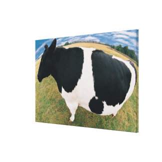 Side View of Friesian Cow Canvas Print