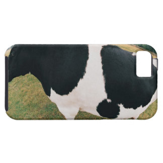 Side View of Friesian Cow iPhone 5 Cover