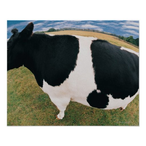 Side View of Friesian Cow Print