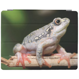 Side View Of Frog On Reed iPad Cover