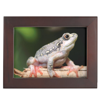 Side View Of Frog On Reed Keepsake Box