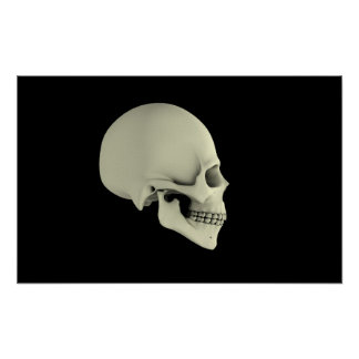 Side View Of Human Skull Poster