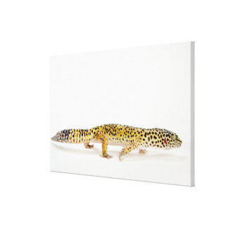 Side view of leopard gecko lizard canvas print